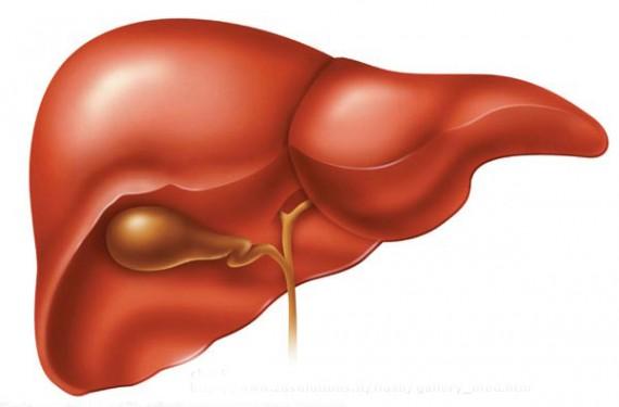 Anabola steroider , leverfunktion och AST och ALT blodprov